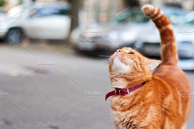 Ginger Cat.JPG - Animals
