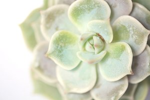I heart succulents