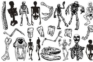 Skeletons Vector Pack
