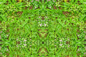 Digital Nature Collage Pattern Mosaic