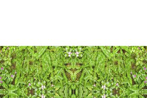 Stationery Background with Nature Borders