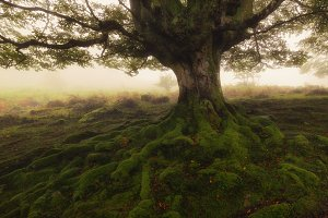 Tree roots in a foggy day