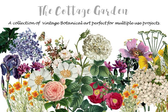 COTTAGE GARDEN BOTANICAL PRINTS