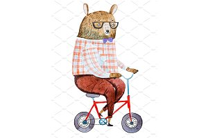 Cartoon bear dressed up in hipster clothes riding a bike drawn on white paper with watercolor technique