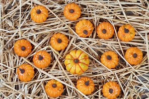 Pumpkins and Straw for Fall Holidays
