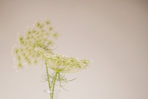 01 Queen Anne's Lace Mockup Template