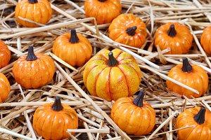 Little Pumpkins for Autumn Holidays