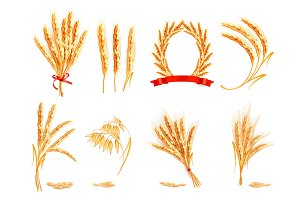 Ears of wheat, oat, rye and barley