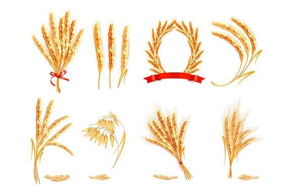 Ears Of Wheat Oat Rye And Barley
