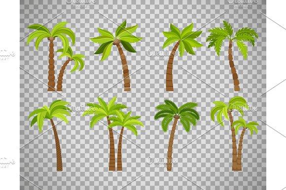 Palm Trees Set On Transparent Background