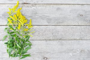 Yellow flowers and wooden background