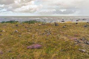 Rosehip on a sandy beach in a storm