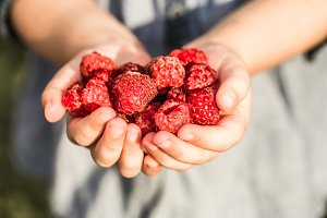 girl holding in hand fresh raspberries