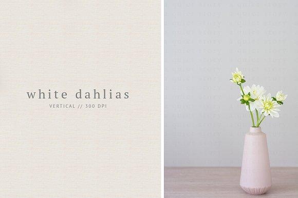 White Floral Buds In Pink Vase