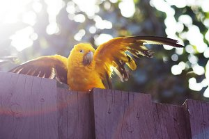 Yellow parrot with sunlight