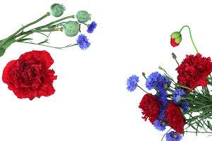 Poppy and cornflower white backgroun