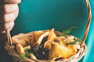 Basket with wild mushrooms chanterelles in female hands