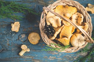Basket with wild mushrooms chanterelles on a blue background