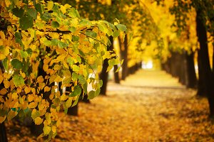 Fall concept, autumn nature in city