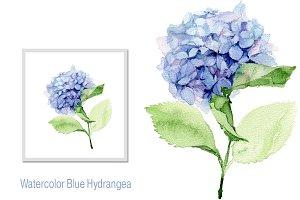 Blue Hydrangea. Hortensia.