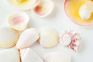 Seashells assorted