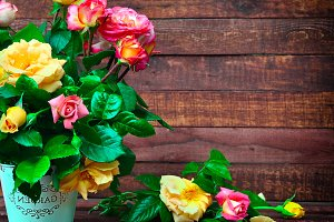 flowering multicolored roses