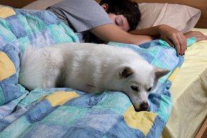 Family Dog with girl sleeping