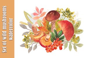 Set of wild mushrooms watercolor