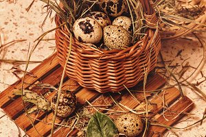 Quail eggs in basket. Easter.