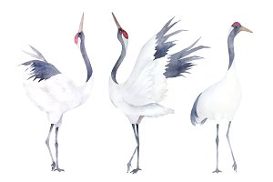 Watercolor Cranes