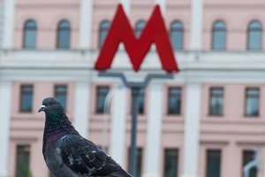 M-symbol of the underground metro and pigeon