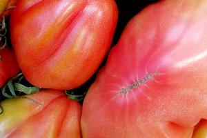 Natural fresh tomatoes