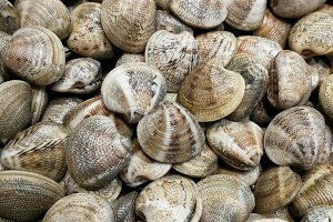 Clams at the fish market