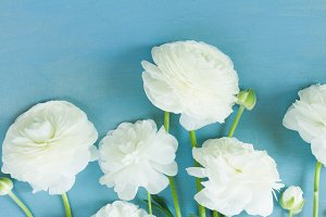 white ranunculus flowers