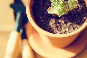 Green house plants in brown clay pots on an old wooden background succulent. Gardening tools. instagram filter
