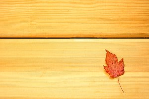 Autumn dry colorful leaves herbarium wooden table