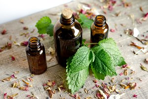 Essential Herbs 16
