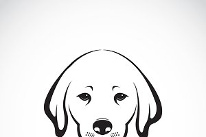 Vector of Labrador dog head. Pet