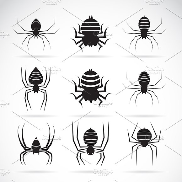 Vector Group Of Spiders Insect