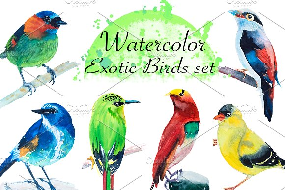 Watercolor Exotic Birds Set