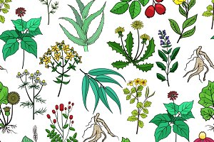 Drug plants and medicinal herbs