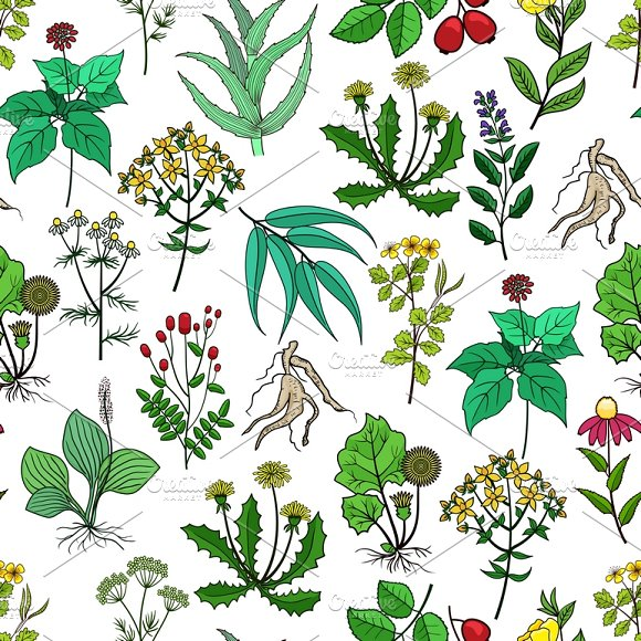 Drug Plants And Medicinal Herbs