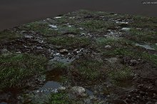 Textures - Grass, Mud, Puddles by  in Organic