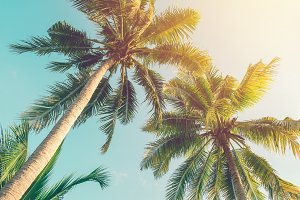 Vintage coconut tree and sky