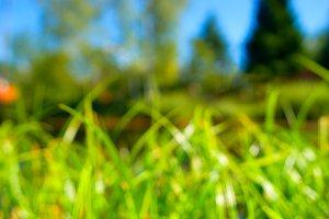Horizontal green summer grass bokeh background