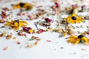 Essential Herbs 23