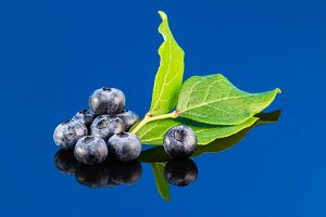 Blueberry on blue background with leaf