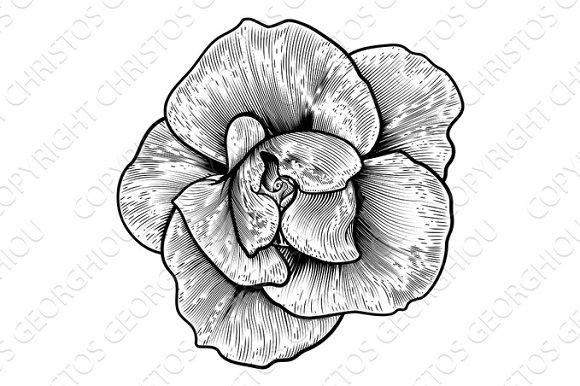 Rose Flower Woodcut Vintage Engraved Etching