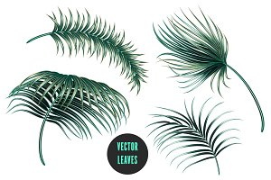 Tropical palm leaves illustrations