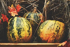 Decoration with pumpkins